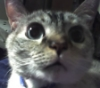 gargoylez: (Ariel sniffs the camera phone)