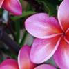kimberly_a: Hawaii (Hawaii)