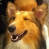 jcollie719: (Collie Wink)