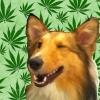 jcollie719: (Collie Weed Wink)