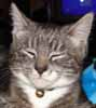 mattblakk: (catface)