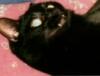 draggonlaady: (Vampire Cat)