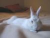 mama_bunny72: (Default)