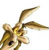 quentincoyote: (wile e.)
