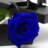 tierfal: (Blue Rose)