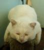 gobis: (кот)