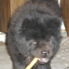 not_hathor: (Chows)