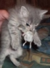 carbonel: (cat with mouse)