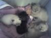 carbonel: (kittens)