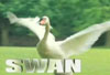 random_nexus: (HF - Swan!)