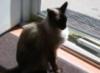 vlbuehle: (nick, cat)