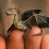 aearwen2: (My Little Dragon)