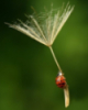 sartan0: (Ladybug on the Breeze)