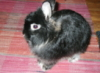 msfledermaus: (Shamu the Bunneh)