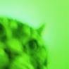 zweelum: (greencaa)