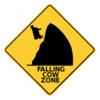 kingrat: (Falling Cow Zone)
