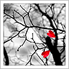 little_star19: (Red leaves grey skies)