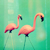 little_star19: (Pink flamingoes)