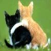 nemo2342: (hugs)