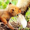 liljajune: (fox)