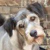 kaasirpent: (Old Pets)