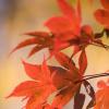 kaasirpent: (Autumn)