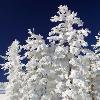 kaasirpent: (Winter)