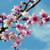 kaasirpent: (Spring)