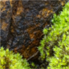 borealgrove: (Meltwater)