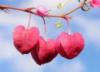 rubibees: (hearts)