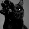liqueurlust: (cat)
