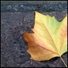 hermionesviolin: one autumn leaf on the sidewalk (autumn)