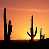 hermionesviolin: 3 saguaro cacti silhouetted against an orange sunset, with the yellow sun setting behind one of them (summer)