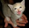 evile: (Danger Cat)