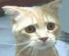 evile: (cookie Cat)