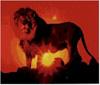 awhyzip: (lion)