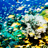 xenodike: (Tanznaia fish)
