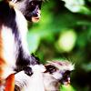 xenodike: (Tanzania monkey)