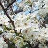 xenodike: (Spring tree)