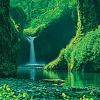 xenodike: (waterfall 1)