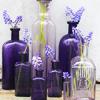 xenodike: (Purple Bottles)