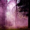 xenodike: (Purple forest)