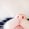 impactings: A cat's nose, seen from below. (07)