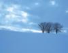 sinthrex: (Snow Trees)