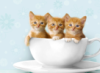 teacentral: (cats in a cup of tea)