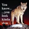 jjmarika: (wolf)