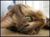 tpena19: (Playful kitty)