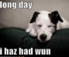 elainetyger: (long day dog)