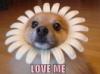 elainetyger: (love me dog)