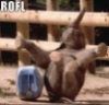 elainetyger: (rofl elephant)